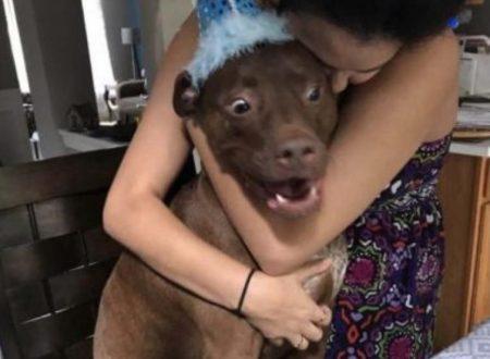 Catturano il momento esatto in cui il loro cane vede la torta di compleanno